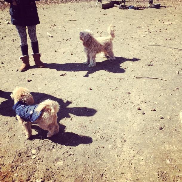 fun at the dog run!
