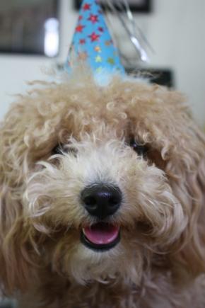 chutney's first birthday